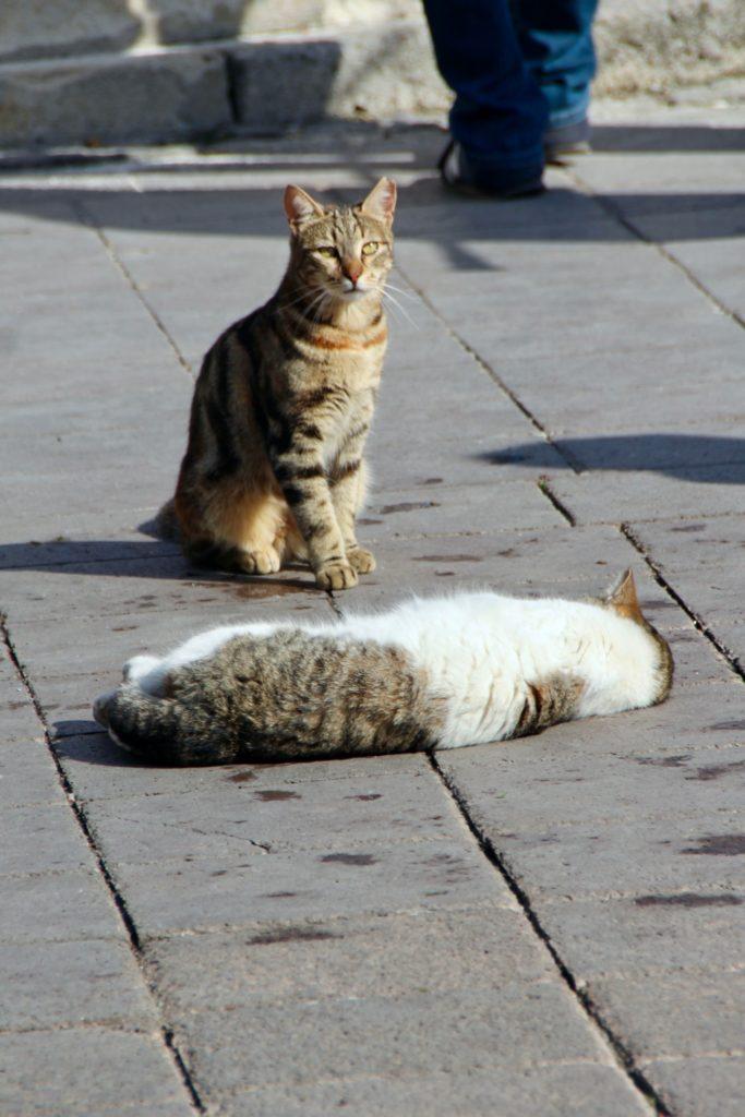 Istanbul en 4 jours : les chats